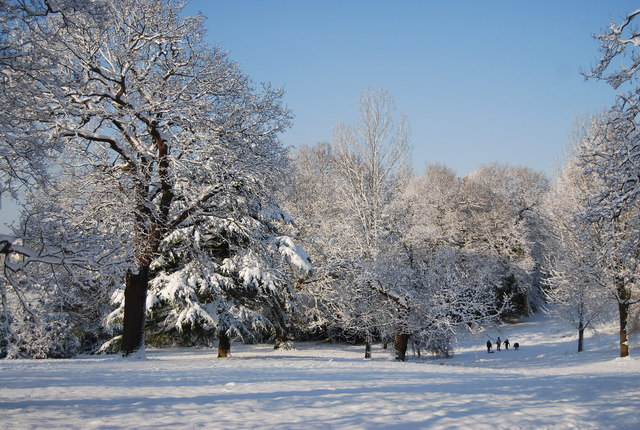 Wintery trees, Calverley Park