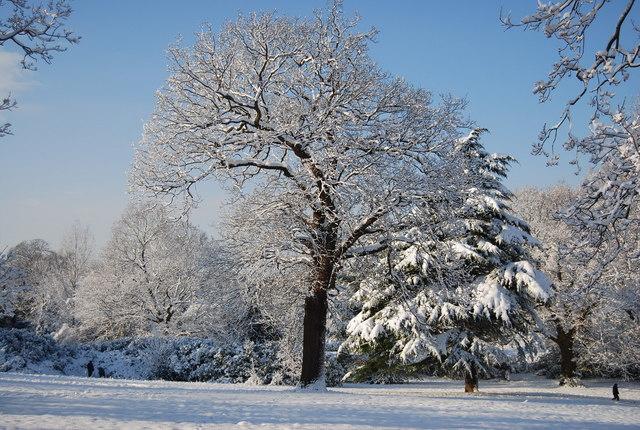 Wintery tree, Calverley Park