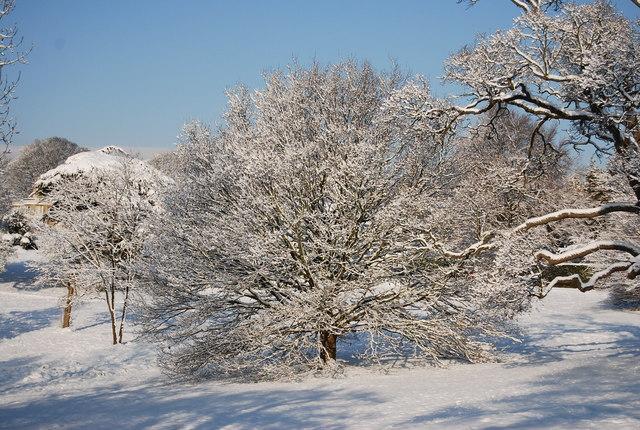 Wintery scene, Calverley Park