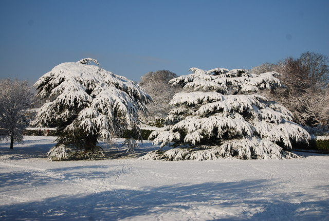 Two trees covered in snow, Calverley Park