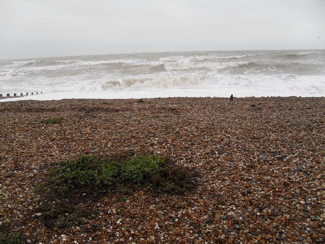 Seaweed on Rustington Beach