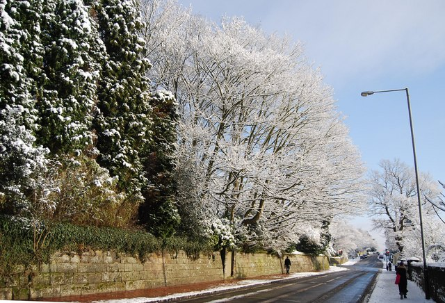 Wintery trees by Calverley Rd