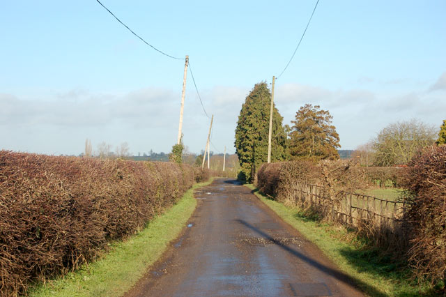 Power and phone poles along the track to Marton Fields Farm