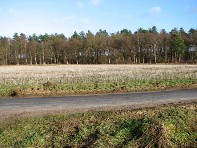 The western edge of Cockleycley Wood