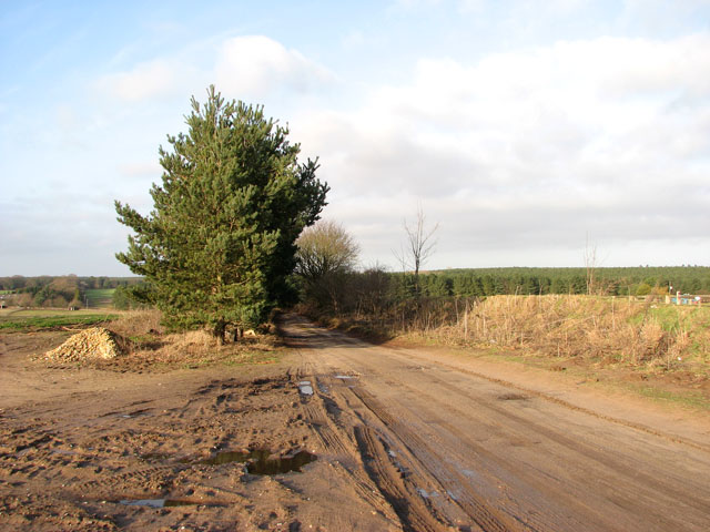 The Peddars Way Bridle Route from Drymere to the A1122 road