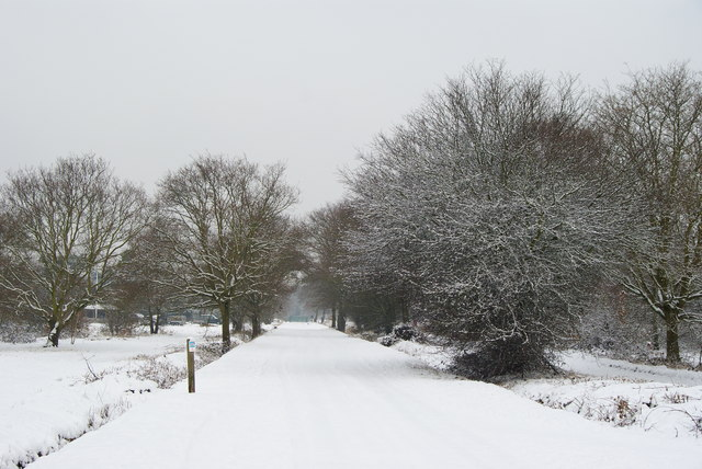 Bridleway on Wimbledon Common