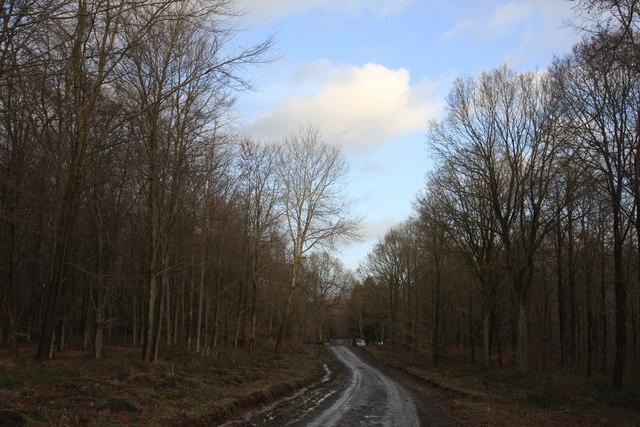 Earnwood Copse, Wyre Forest.