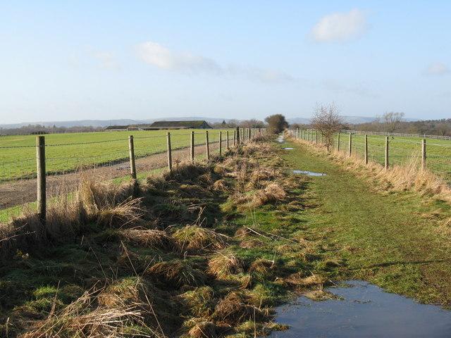 Gallops alongside footpath to Tickletag Farm