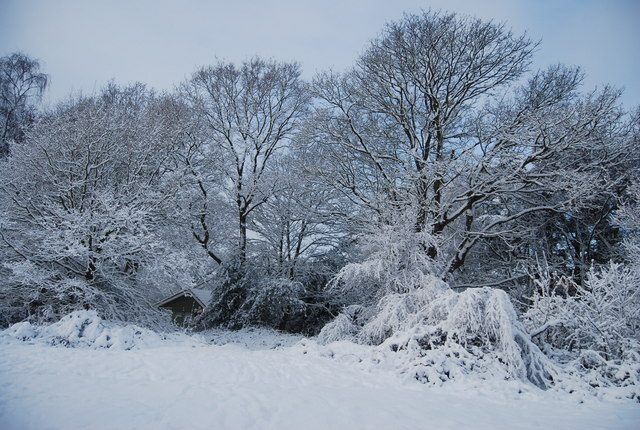 Wintery scene, Tunbridge Wells Common