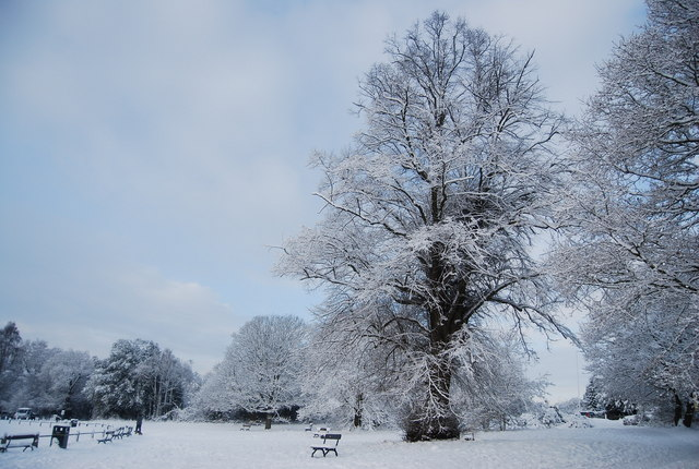 Snow covered trees by the cricket pitch, Tunbridge Wells Common