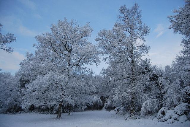 Wintery trees, Tunbridge Wells Common