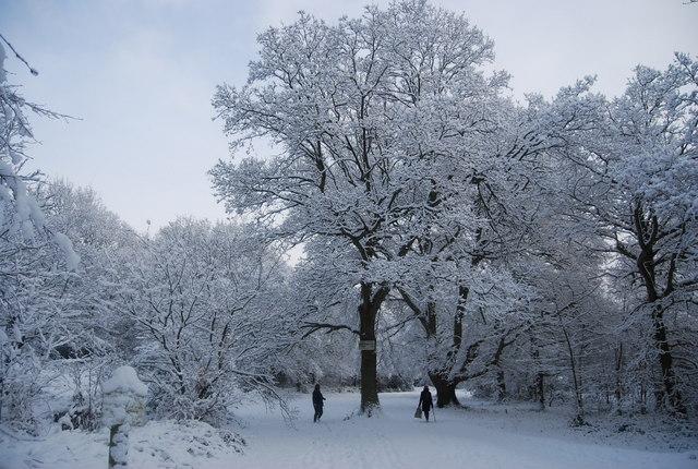 Snow covered Tunbridge Wells Common