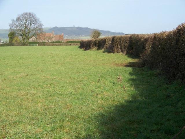 Pasture near Bromley Farm