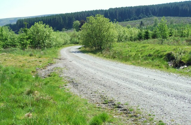 Forestry track with hardwood saplings