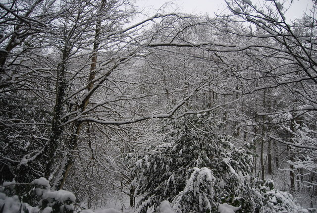 Snow covered woodland, Reynolds Lane
