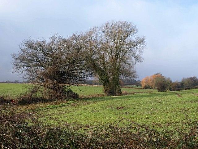 Trees near Daws Lane
