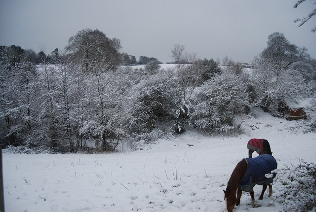 Horses, Smockham Farm