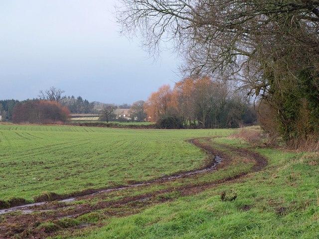 Trees and field near Daws Lane