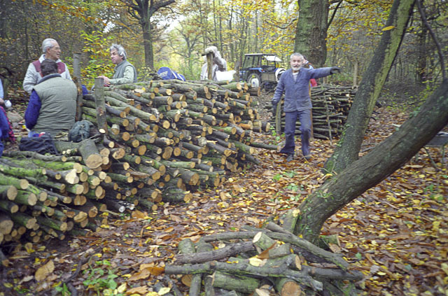 Cordwood stacks in Pound Wood