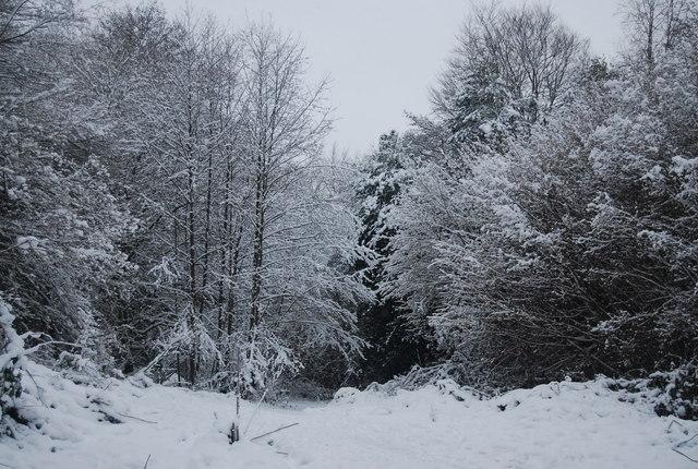 Snowy woodland by the path from Smockham Farm