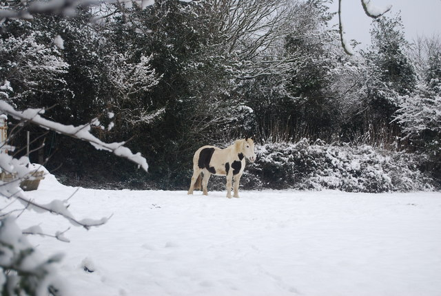 Horse just south of Speldhurst Rd