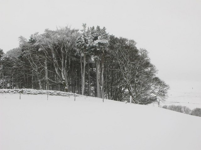 Plantation above Allendale in the snow
