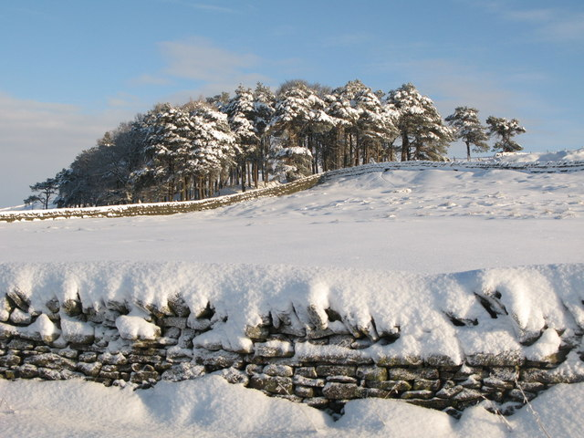 Plantation below Green Hill in the snow