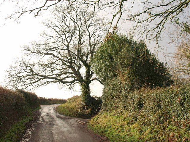 Lane junction north of Thurloxton