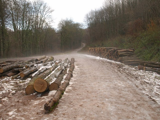 Logs by the Macmillan Way, King's Cliff Wood