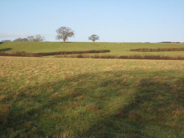 Farmland near Meare Green