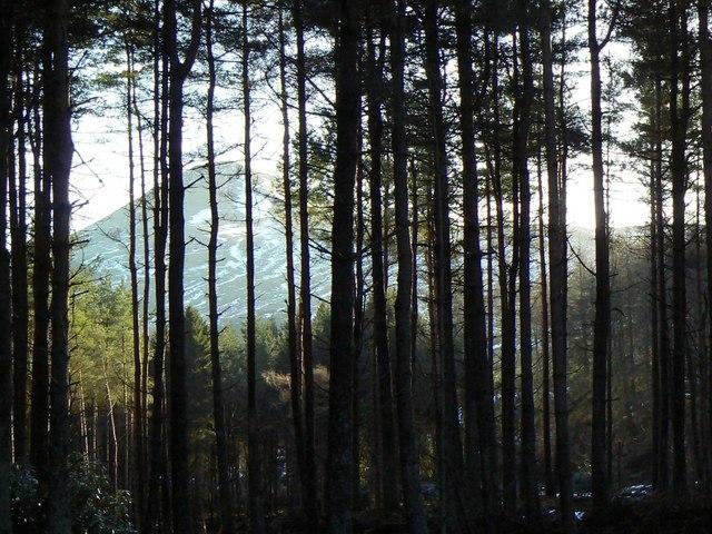Keek through the trees