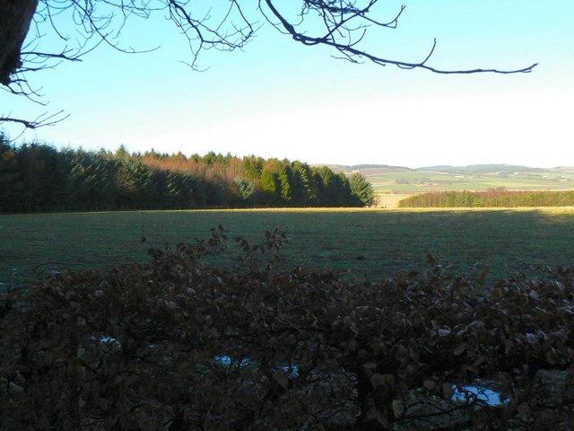 Chancefield Wood