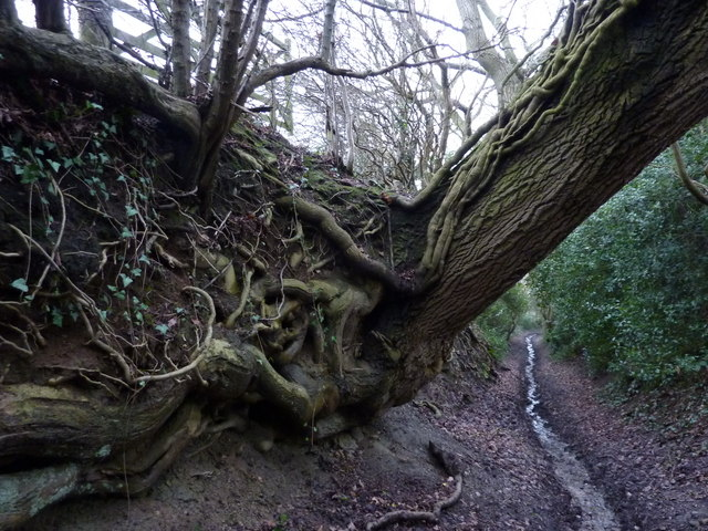 Eroded roots