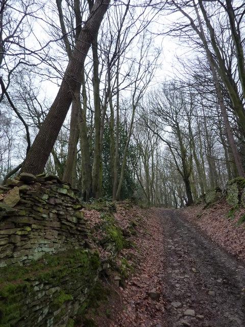 On a bridleway through Hollin Wood
