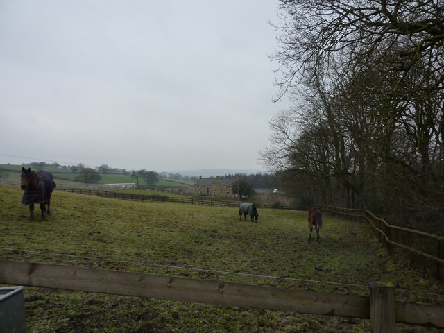 Horses in field near Grangewood Farm