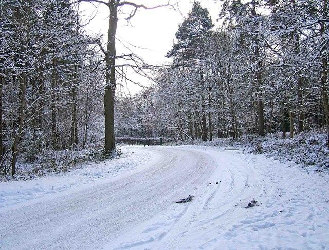 Wyre Forest - Hawkbatch car park access road looking towards B4194 road