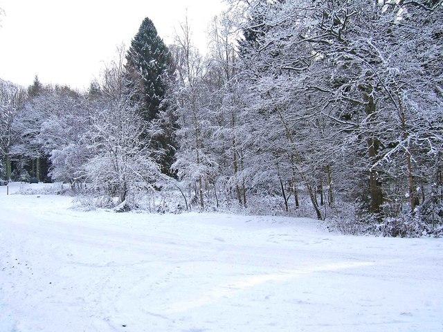 A snowy scene at Hawkbatch, Wyre Forest