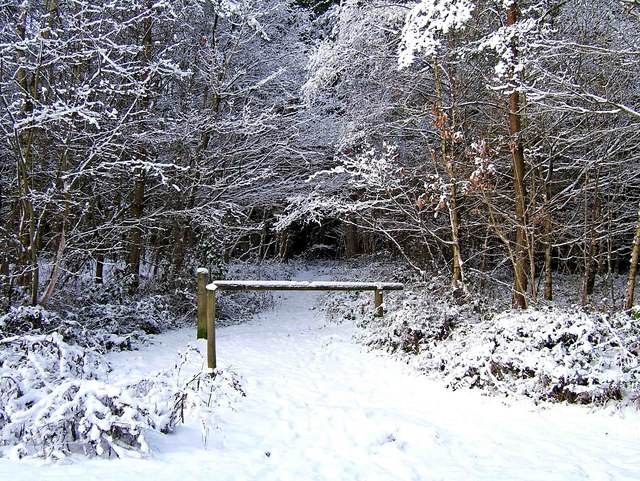 A snow covered path at Hawkbatch, Wyre Forest