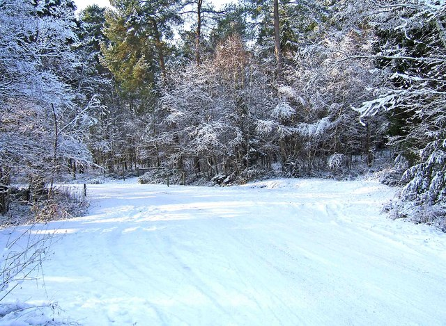 Snow scene at Hawkbatch, Wyre Forest