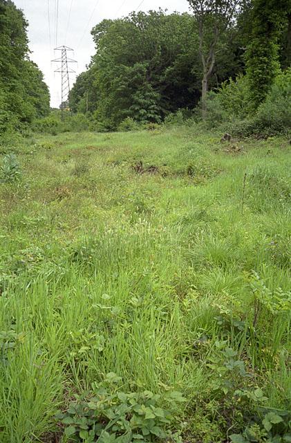 Power line corridor in Pound Wood nature reserve, Benfleet