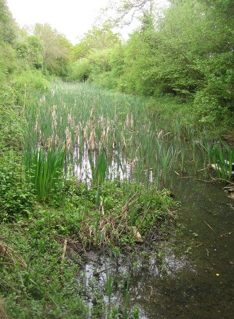 An overgrown Basingstoke Canal