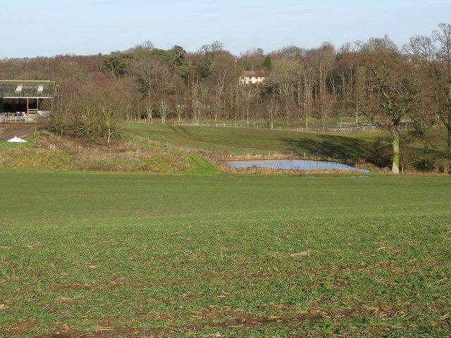 Pond at Threal's Farm