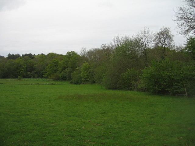 Grazing land near Hang Wood
