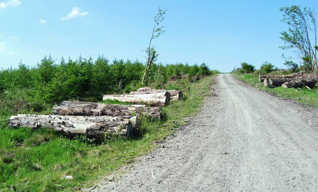 Timber left by the roadside