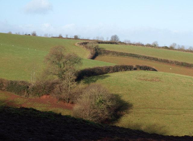 Fields near Cockington Woods Farm