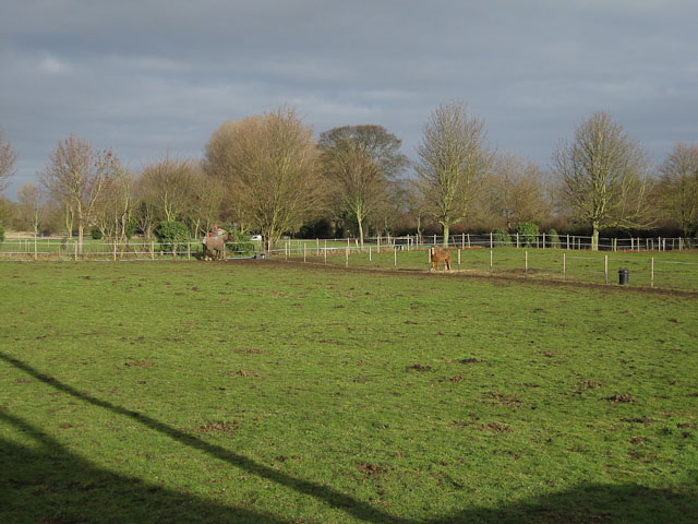 Horse paddock in Worlington