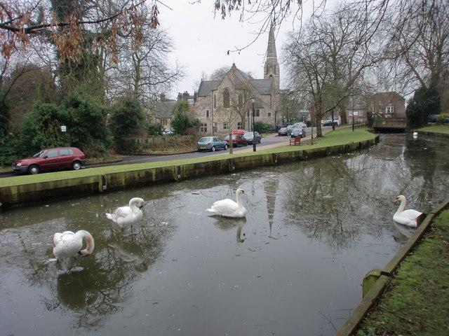 Swans on New River Loop, Enfield