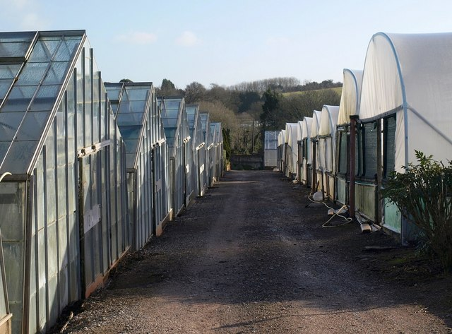 Greenhouses and polytunnels near Moles Lane