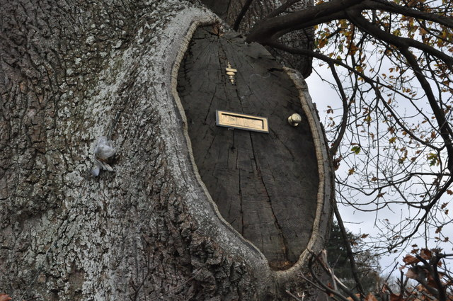 Tree feature