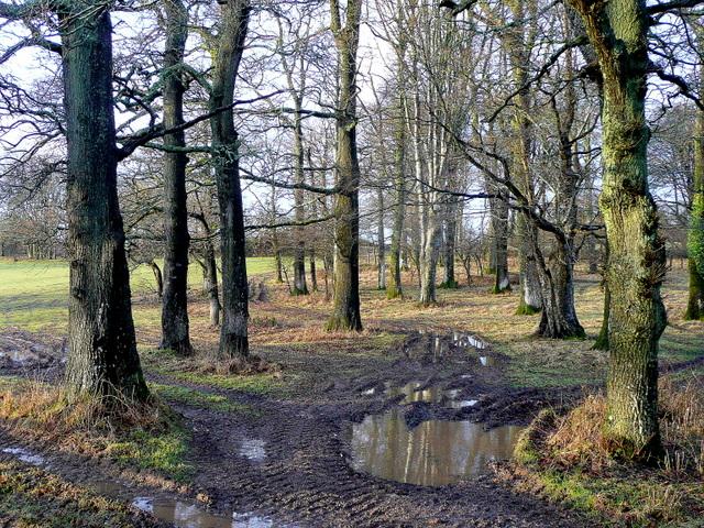 Oak and beech woodland